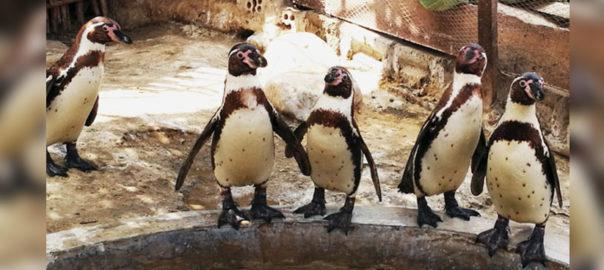 Antamina celebró Día Mundial del Medio Ambiente protegiendo a los pingüinos de Humboldt